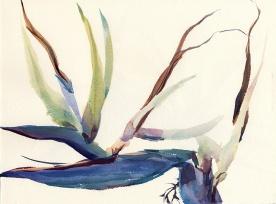 birdofparadise_160725a